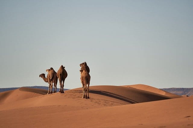 Viaggiare in Marocco: cosa devi sapere per dormire nel deserto